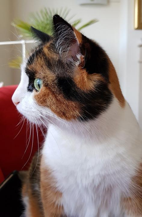 Cat, Alert, Pet, Curiosity