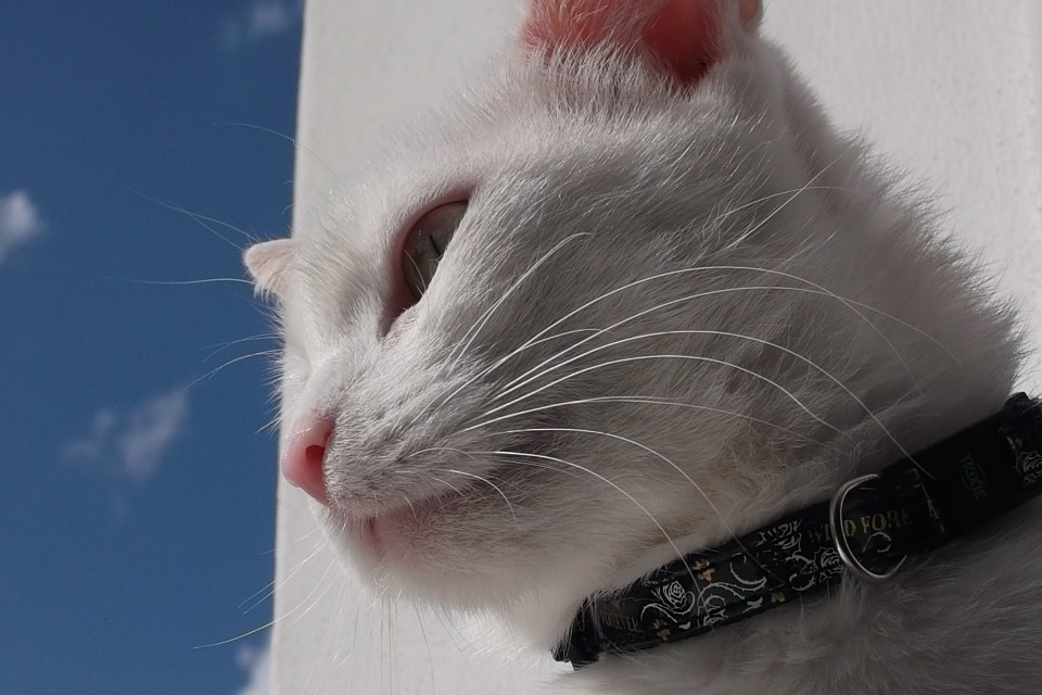 Cat, Animal, View, Nature, Curiosity, Necklace