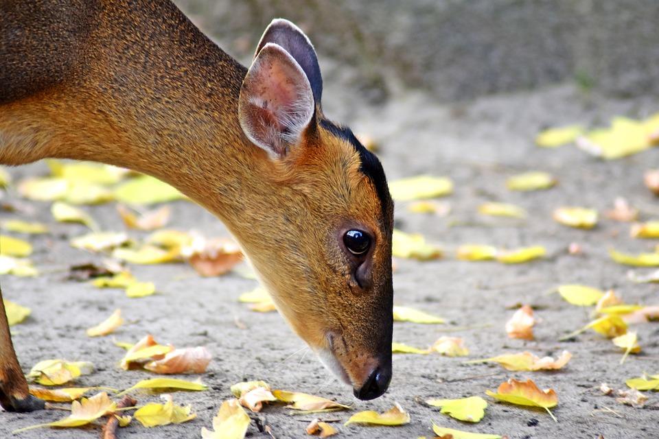 Doe, Animal, Animal World Of, Curious, Bambi
