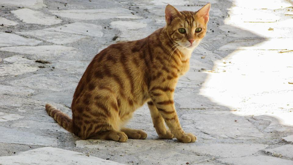 Cat, Stray, Kitten, Kitty, Cute, Red, Curious, Outdoor