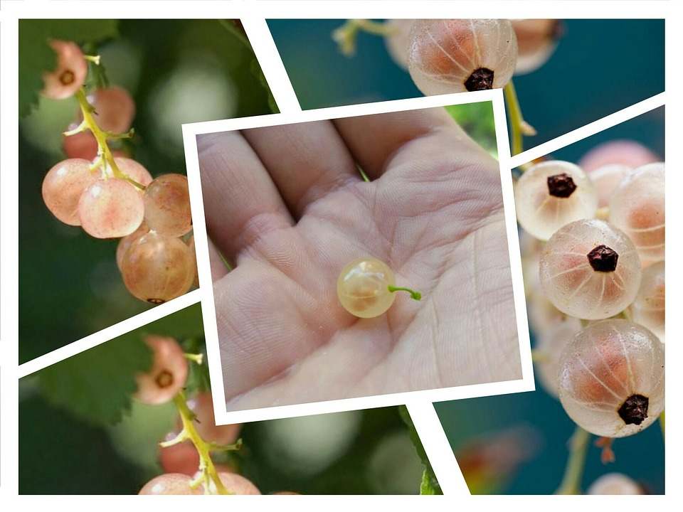 Currant, Nature, Beads