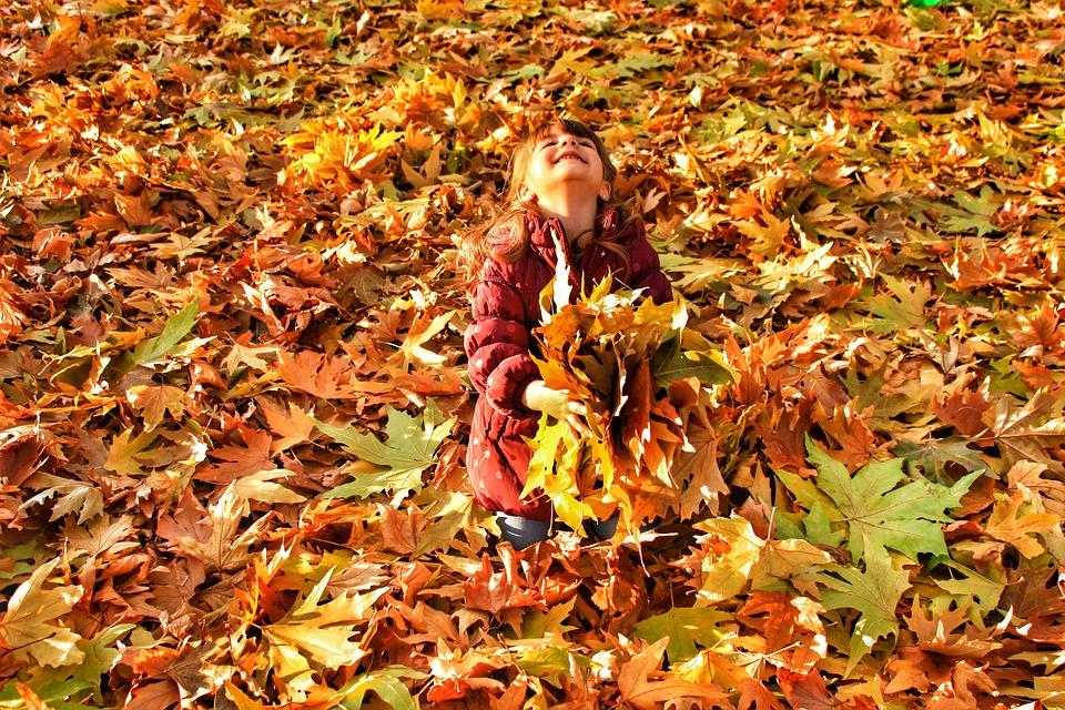 Autumn, Leaves, Current Season, Nature, Maple Trees