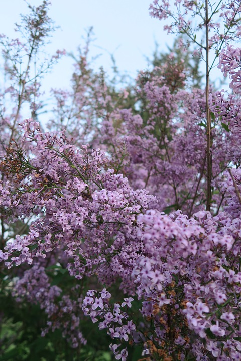 Flower, Plant, Tree, Current Season, Nature, Flowers