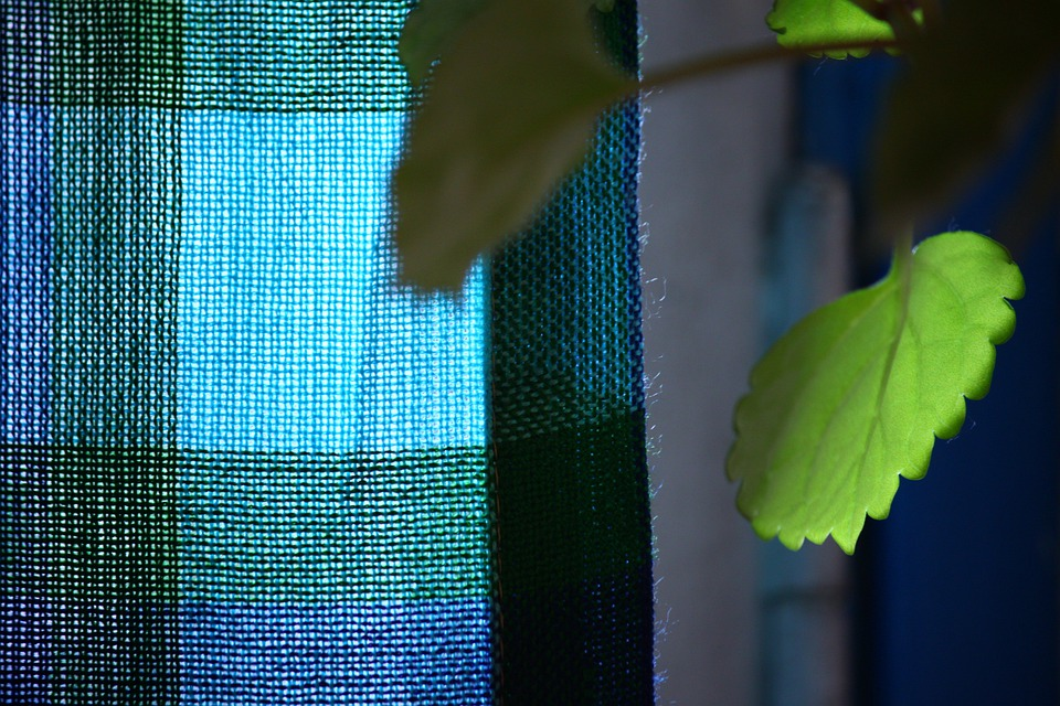 Plant, Leaf, Plants, Green, Leaves, Curtain