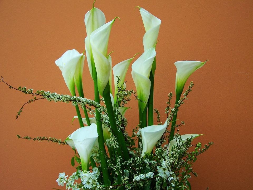 Free photo Cut Flower White Calla Lily Flower Bouquet - Max Pixel