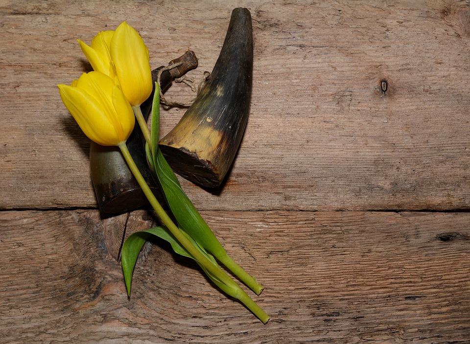 Tulips, Flowers, Yellow, Cut Flowers, Yellow Flowers