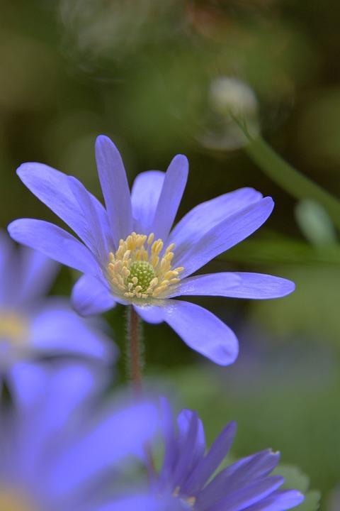 Flowers, Spring, Bokeh, Cut Out, Purple, Plant, Close