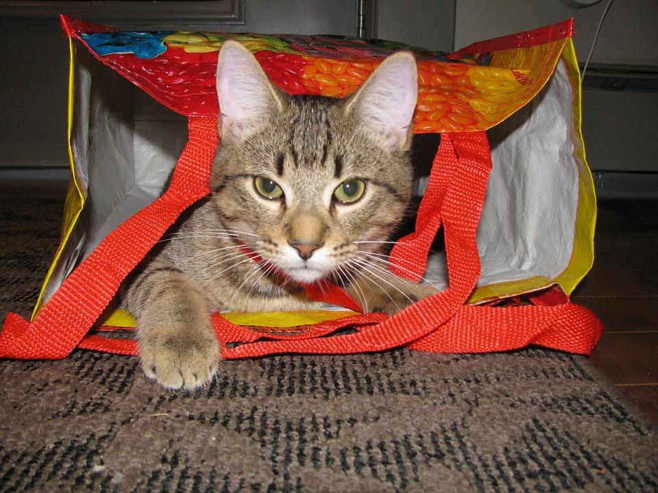Cat, Tabby, Kitty, Feline, Animal, Domestic, Cute