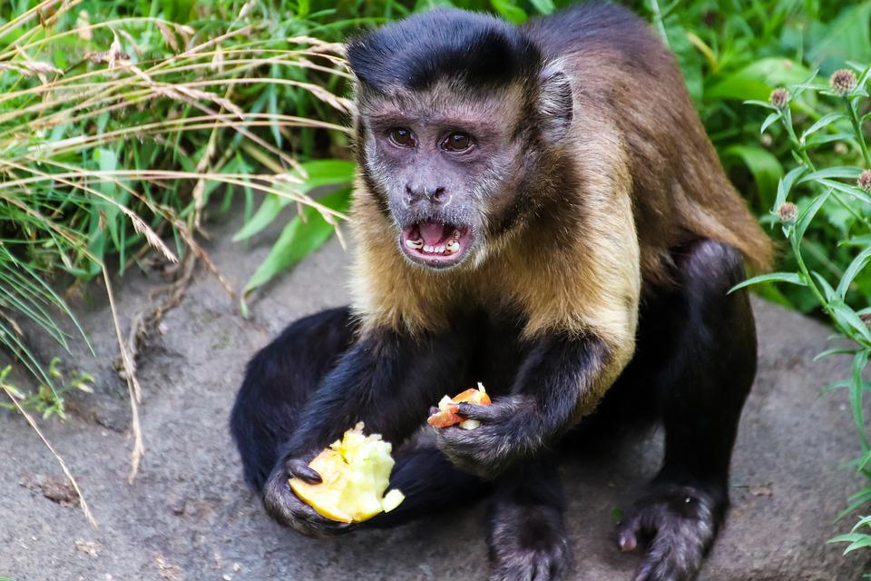 Monkey, Funny, Animal, Cute, Charming, Happy, Fun