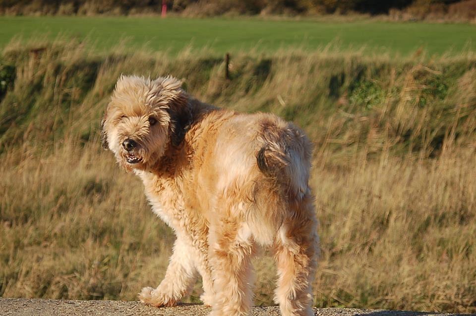 Dog, Fluffy, Pet, Animal, Adorable, Cute, Domestic
