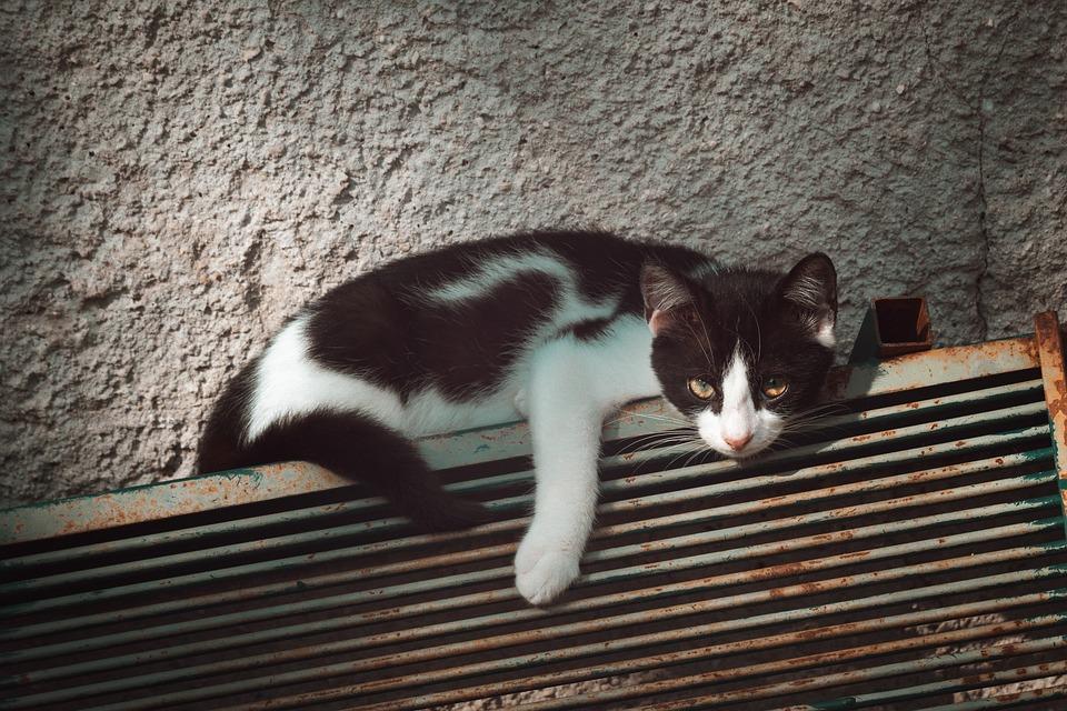 Cat, Pet, Animal, Domestic Cat, Feline, Mammal, Cute