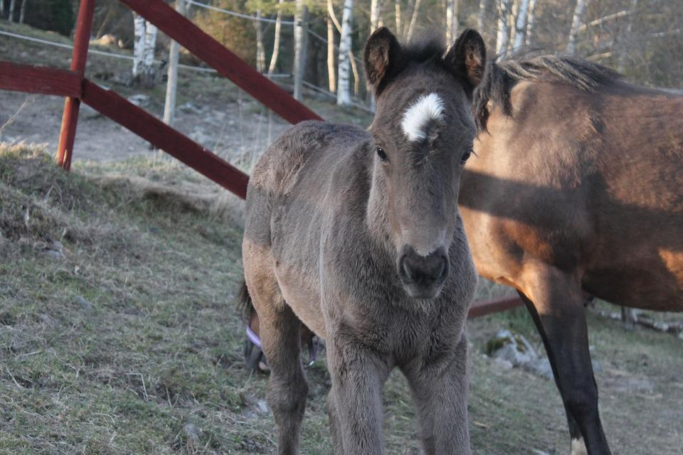 Foal, Baby, Horse, Grey, Cute, Pet, Animal, Spring