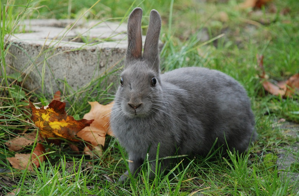 Rabbit, Gray, Nature, Leaf, Animal, Cute, Bunny, Mammal