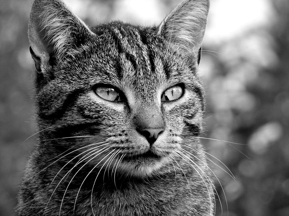 Cat, Look, Feline, Animal, Eyes, Cute, Animals