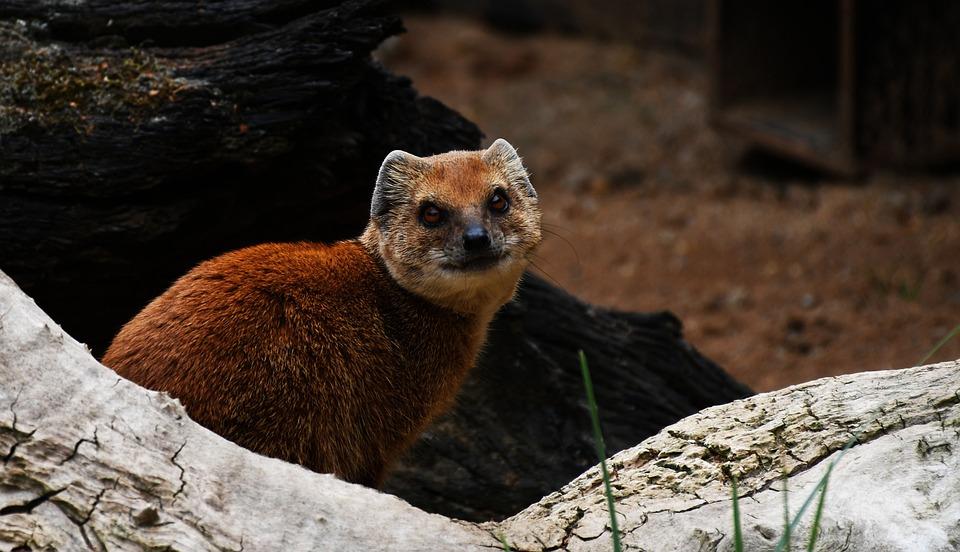Zoo, Cute, Animal, Wild