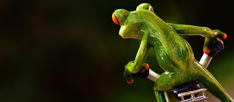 Frog, Bike, Funny, Curve, Cute, Sweet, Fig, Drive