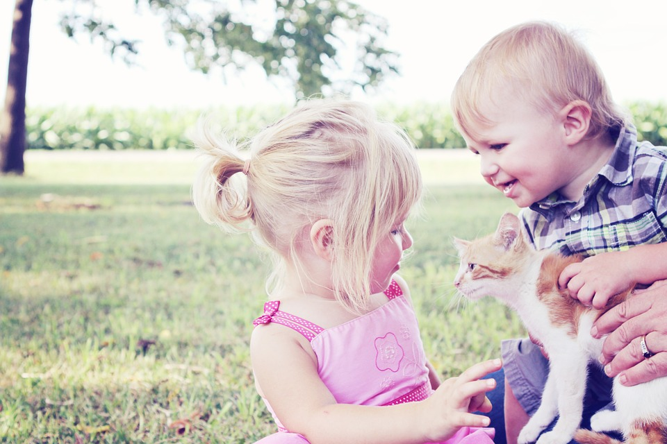 Girl, Boy, Kitten, Pet, Animal, Child, Cute, Young