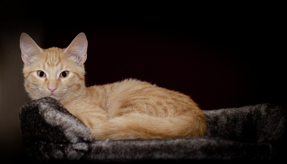 Kitten, Cat, Care Cat, Sweet, Cute, Saved, Relaxed, Is