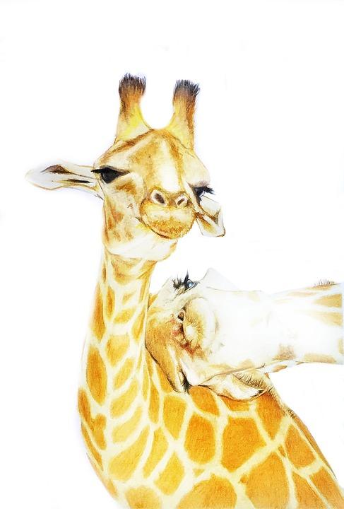 Free Photo Cute Cartoon Animal Drawing Giraffe Max Pixel