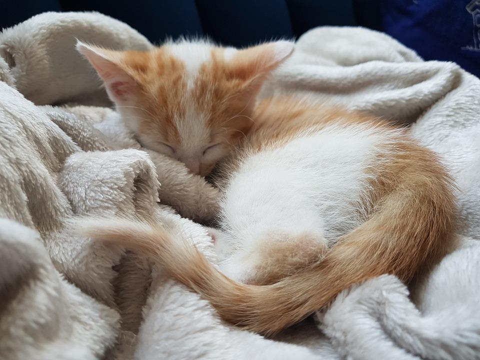 Cute Kitten, Ginger Kitten, Ginger Cat, Cute Cat