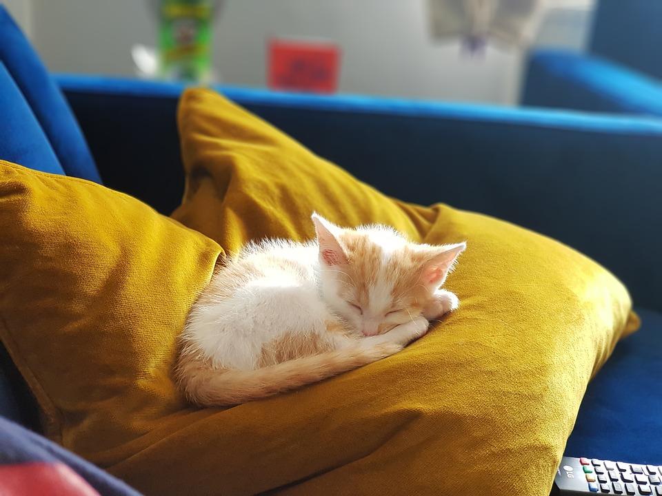 Kitten, Ginger, Ginger Kitten, Cute Cat