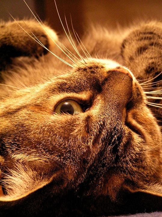 Cat, Kitty, Cute