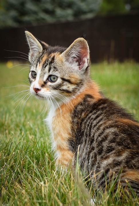 Animal, Cute, Cat, Mammal, Nature