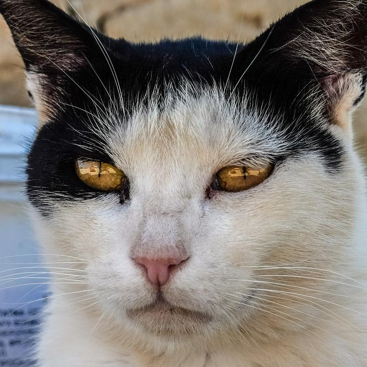 Cat, Stray, Eyes, Animal, Cute, Mammal, Homeless