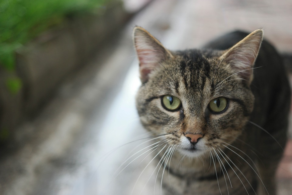 Alley Cat, Only, The Homeless, Cute, Animal, City, Cat