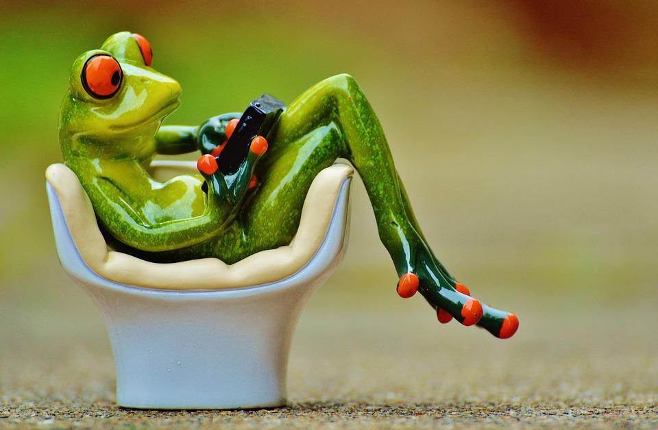 Frog, Chair, Cozy, Tablet, Pc, Computer, Cute, Sweet