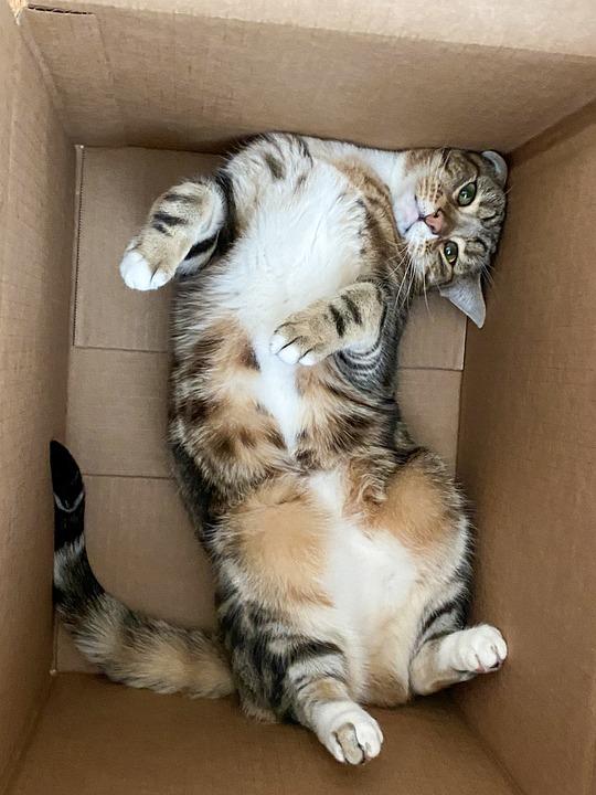 Cat, Feline, Box, Funny, Cute, Animal, Cat In A Box