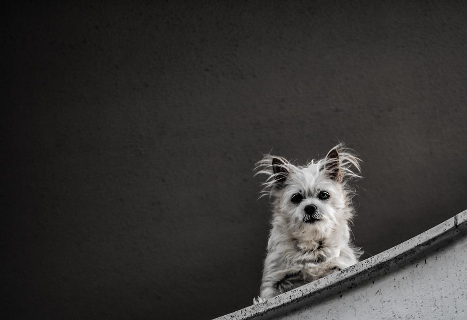 Dog, Animal, Puppy, Cute, Portrait, Adorable, Fur