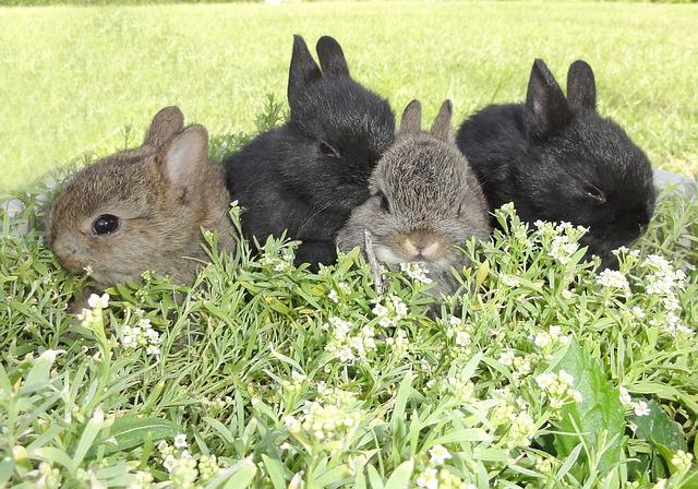 Garden, Flowers, Bunnies, Spring, Sweet, Cute, Little