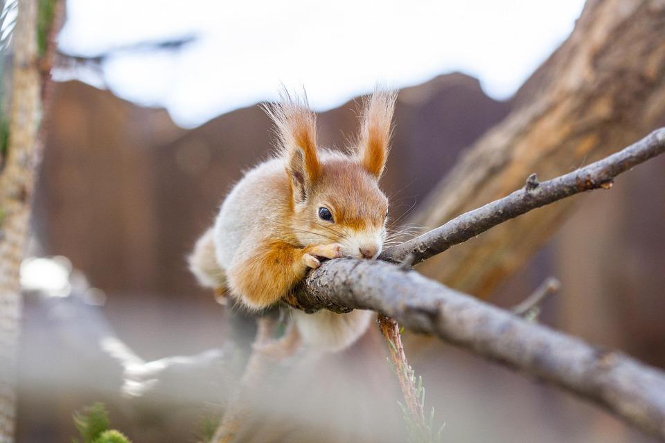 The Squirrel, Animal, Cute, Nature, Hairy, Garden, Wild
