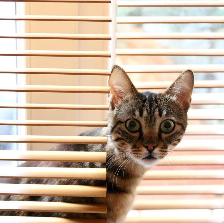Kitty, Warm, Cute