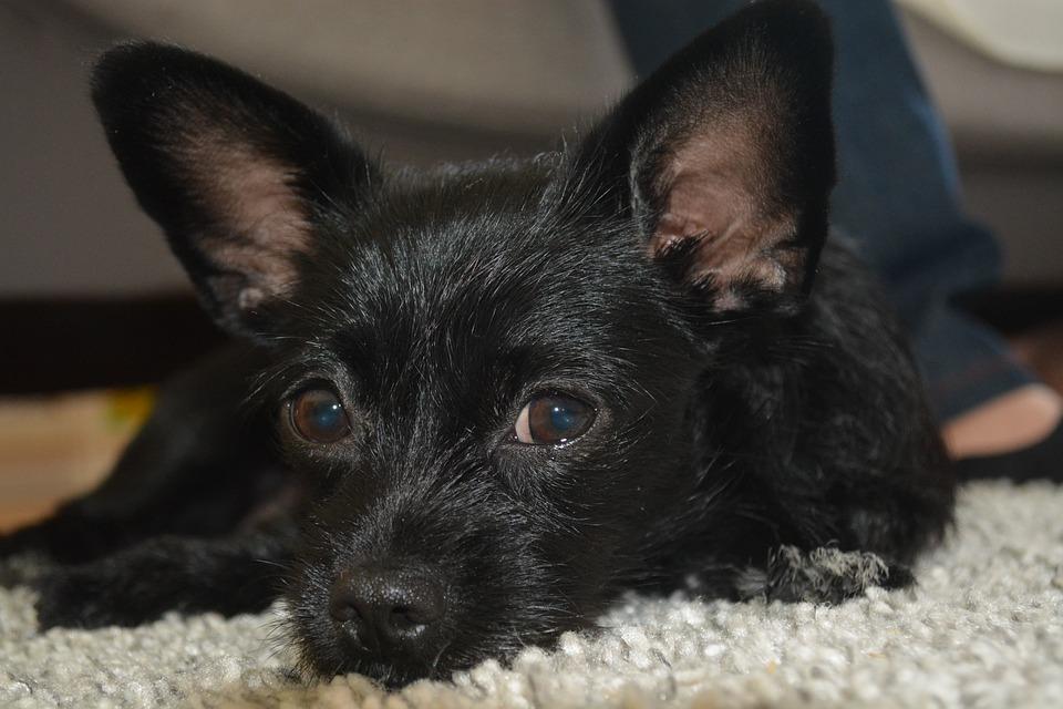 Dog, Mammal, Cute