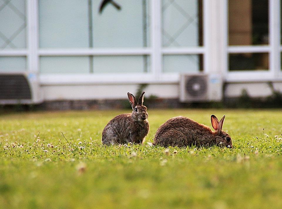 Rabbit, Wild Rabbit, Mammal, Grass, Cute, Meadow, Wild