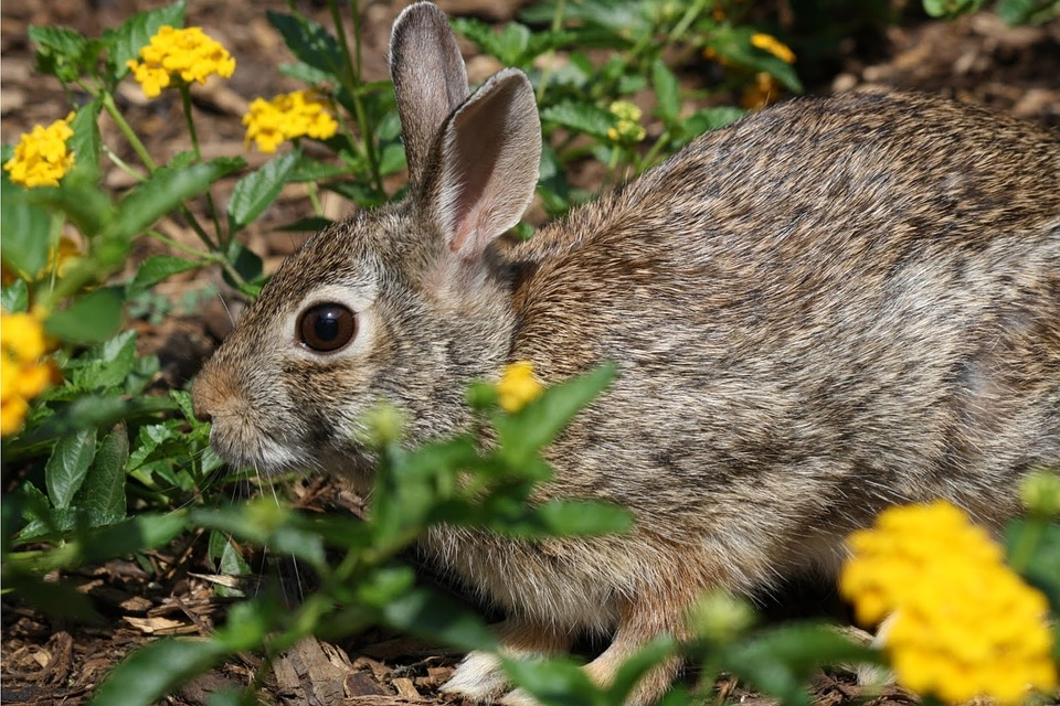 Nature, Cute, Little, Animal, Mammal, Rabbit, Bunny