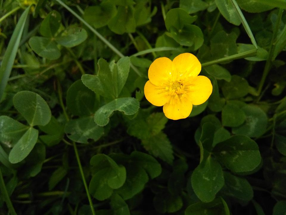 Free Photo Cute Nature Flower Yellow Little Photography Max Pixel