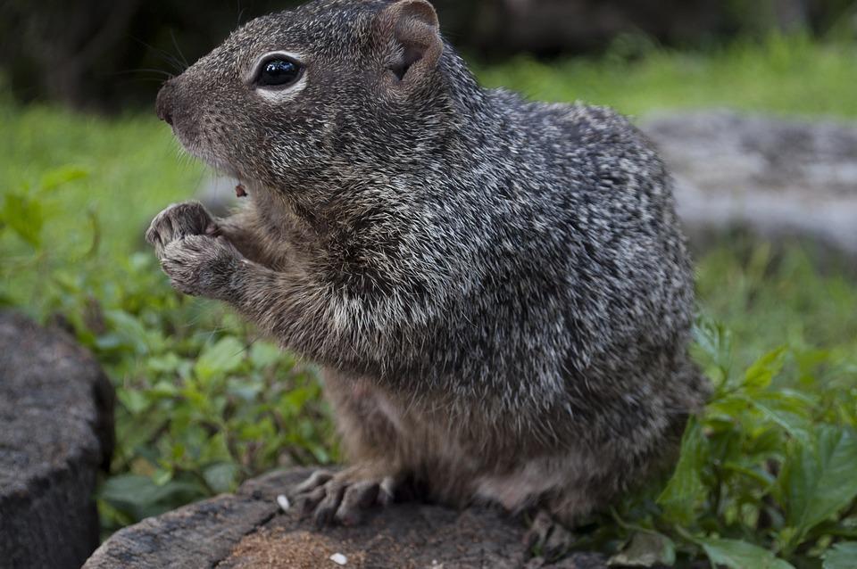 Mammal, Wildlife, Nature, Animal, Cute, Rodent