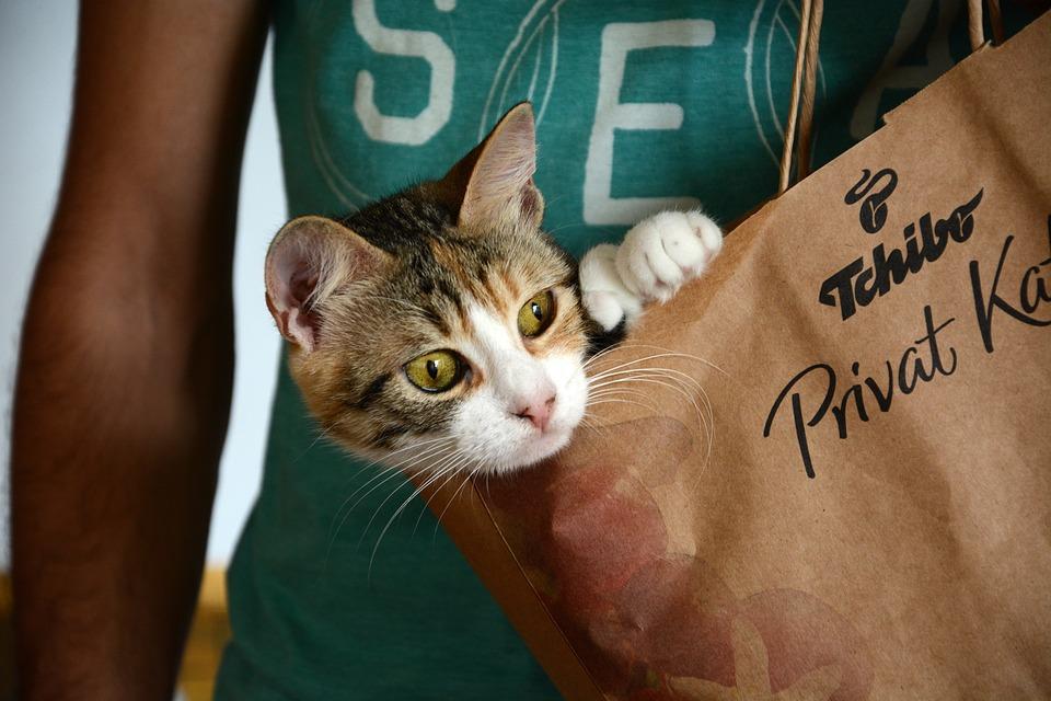 Cat, Cute, Naughty