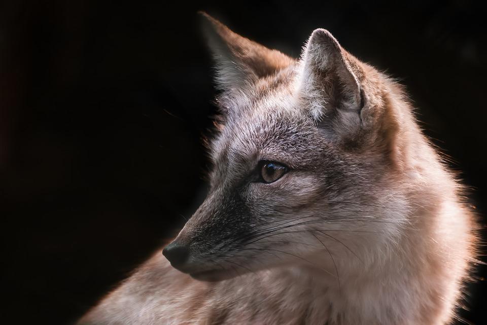 Mammals, Nature, Wildlife, No Person, Cute, Fox