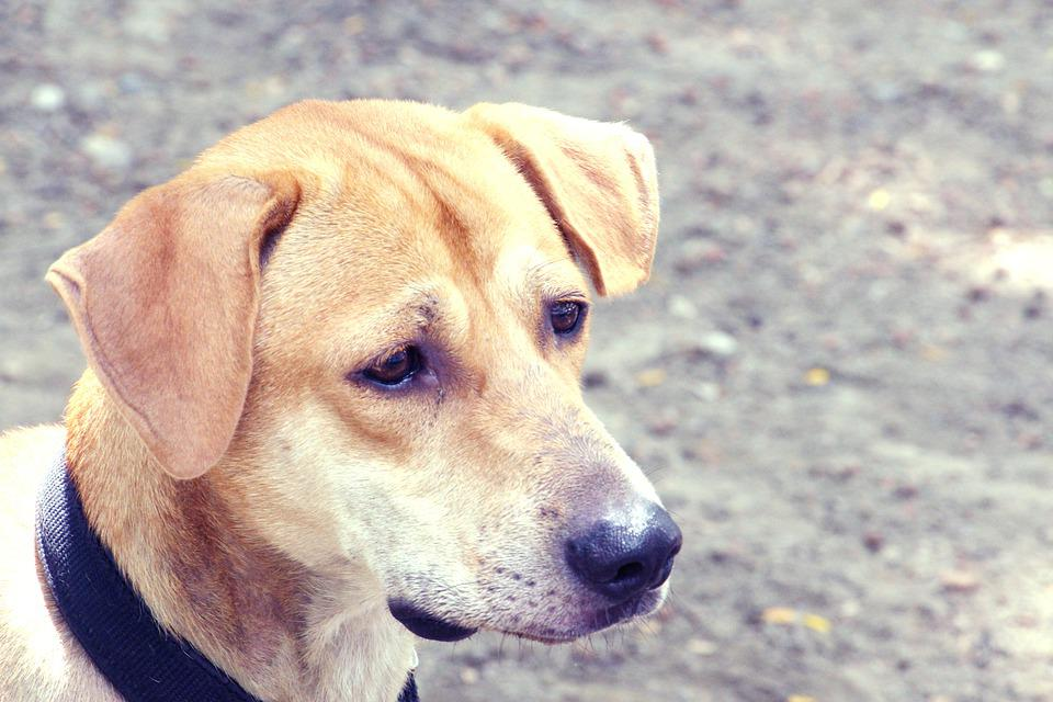 Dog, Animal, Cute, Pets, Canine, Outdoor, Stray Dogs