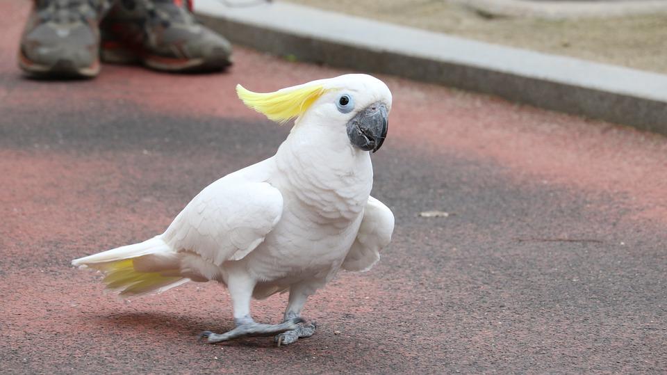 Animal, Nature, Park, Cute, Parrot