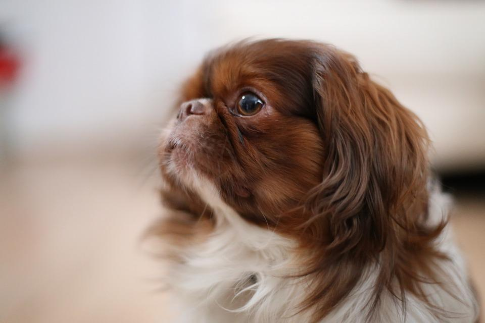 Side, Dog, Animal, Pet, Canine, Cute, Happy, Face, Site