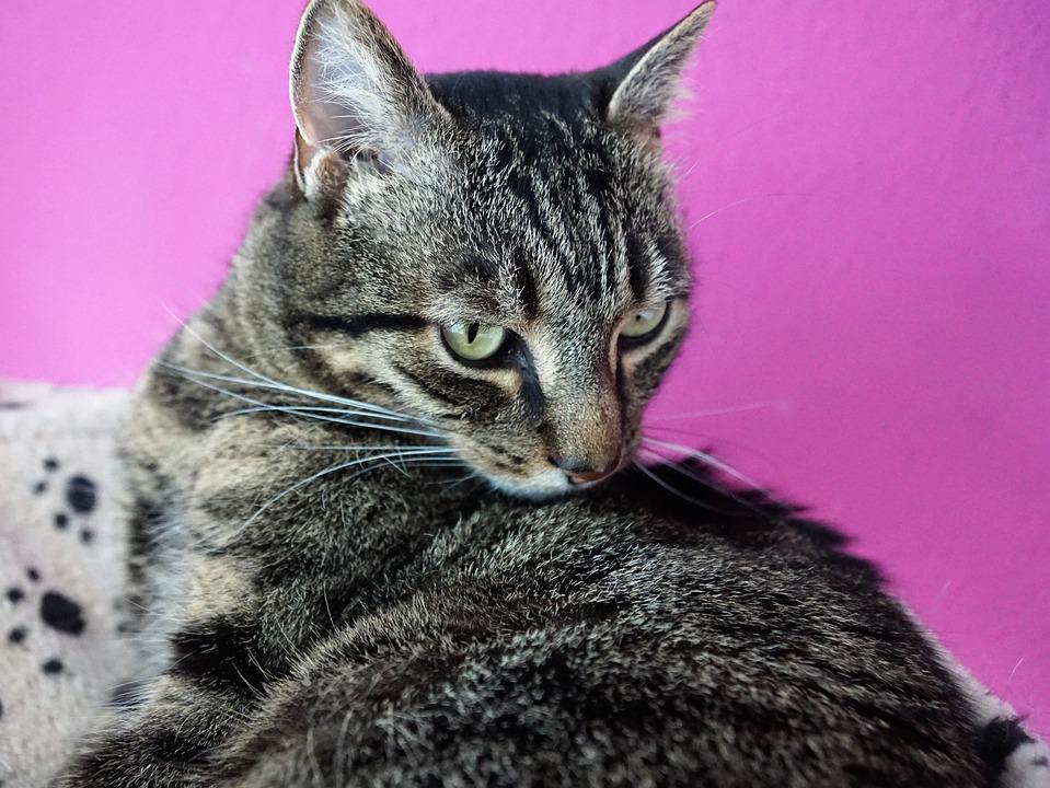 Animal, Cute, Cat, Mammal, Portrait, Pet, Nature, Fur