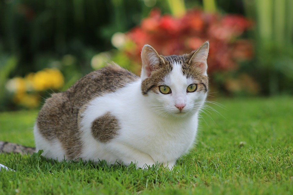 Pet, Cat, Cats, Young, Portet, Cute, Kitty