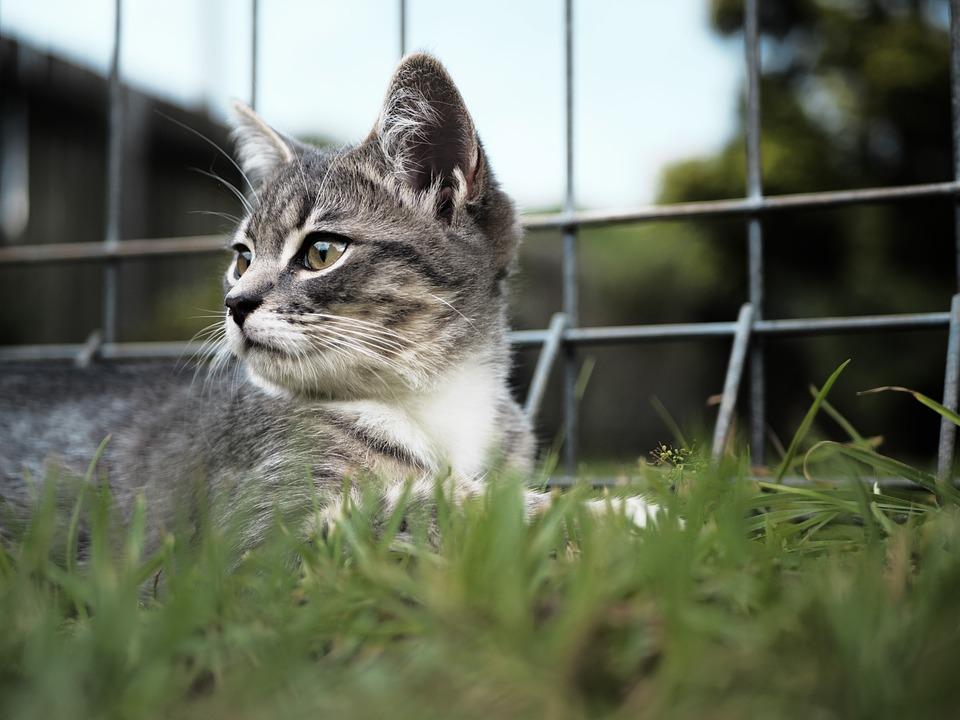 Kitten, Cat, Cute, Animal, Pet, Domestic, Feline, Young