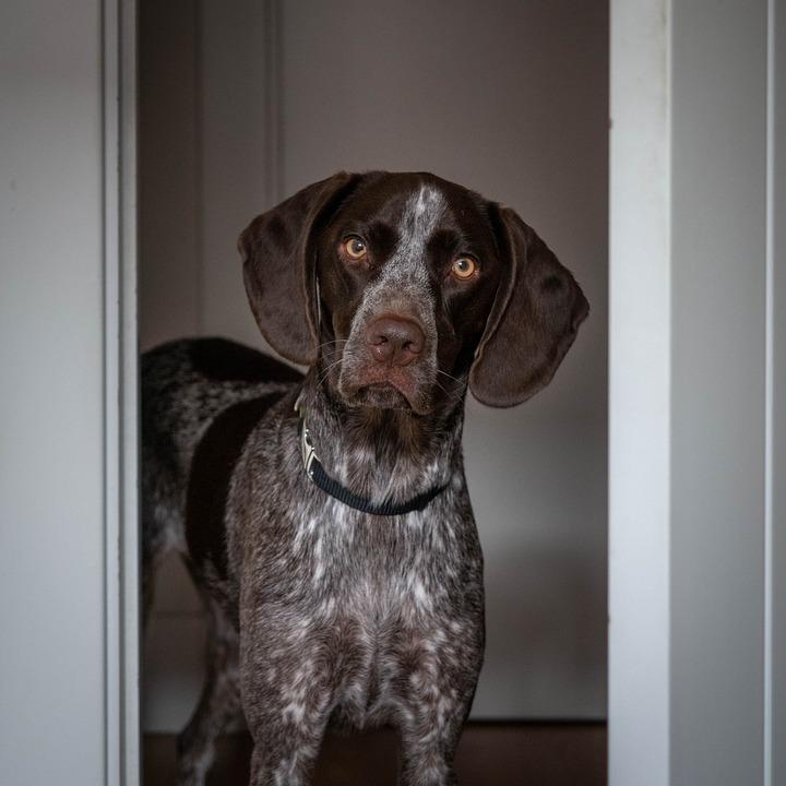Dog, Pet, Animal, Domestic Dog, Canine, Mammal, Cute