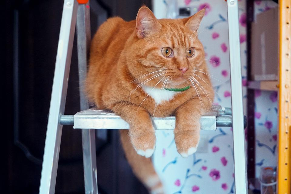 Animals, Cats, Pets, Red, Home, Cute, Kitten, Feline